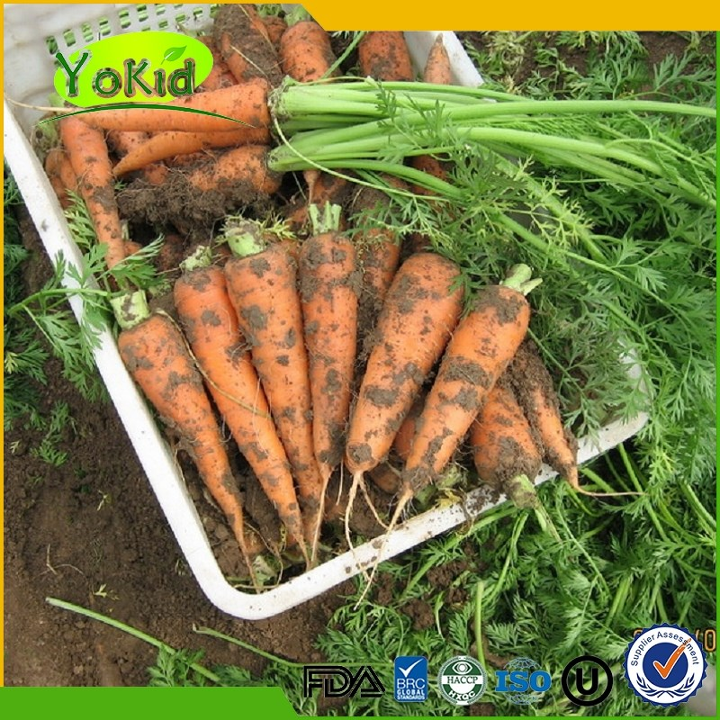 Factory wholesale Fresh carrot For Sale from China