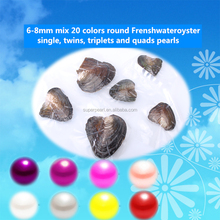 100pcs 6-8mm mix 25 colors round Akoya single, twins, triplets and quads pearls fresh oysters individually packed big party pack