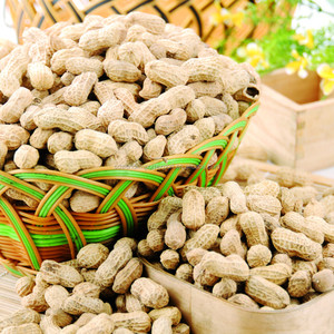 New Crop Good Quality Shandong Raw Peanuts In Shell