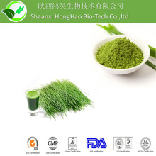 Spray Dried wheat grass powder/organic wheat grass powder/wheat grass juice powder