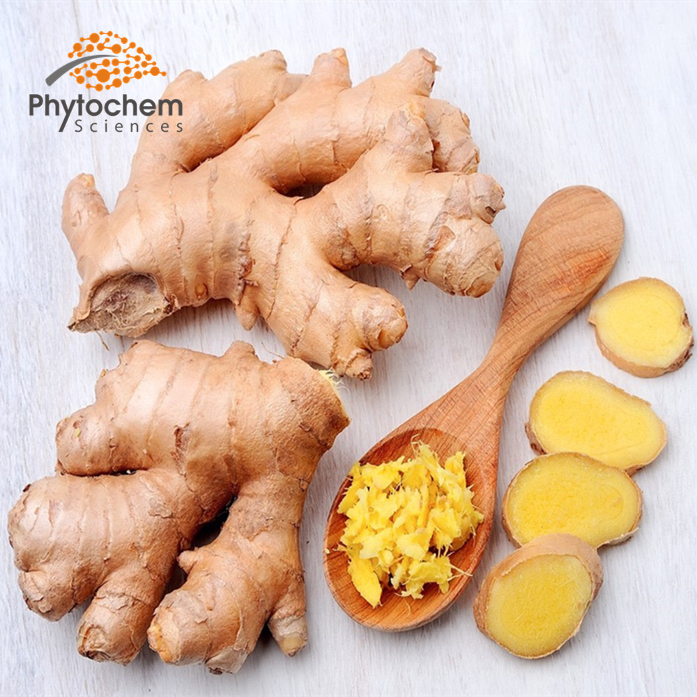 ginger extract powder