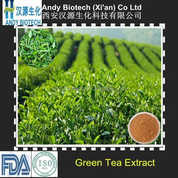 Free Sample Plant Extract 80% Polyphenols Green Tea Extract Powder in Bulk