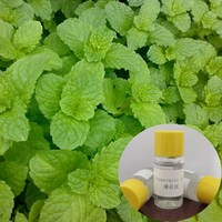 Bo He factory supply 100% Pure natural peppermint essential oil