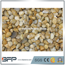 High Quality Yellow Pebble Stone & cobble