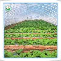 Single Span Tunnel Plastic Green House