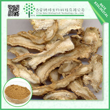 100% Natural chinese Angelica acutiloba extract angelica extraction powder also named Dong Quai Extract