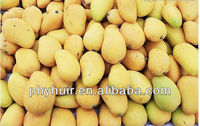 Huir Biological-Tech co.Ltd Professional/manufacture/supply African mango seeds Extract