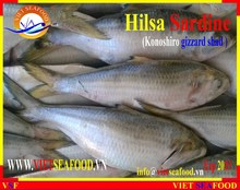 FROZEN HILSA SARDINE WHOLE ROUND