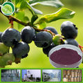 Pure bilberry fruit powder