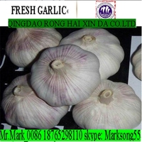 Fresh white garlic in usa imported from China