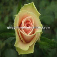 Fragrant aroma high grade yellow fresh rose decoration flowers and wedding flower garlands