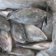 Best Quality Frozen Tilapia Whole Round Price 300-400g Fresh Fish