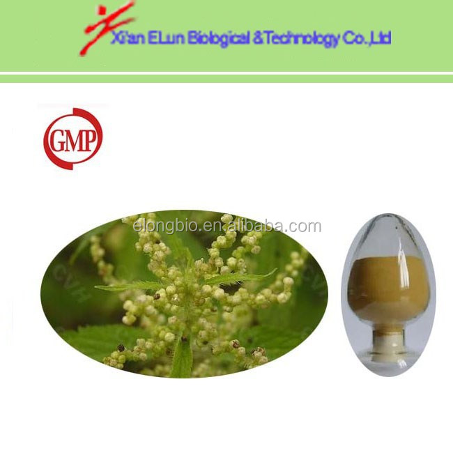 smartweed nettle leaf nettle seeds nettle root extract