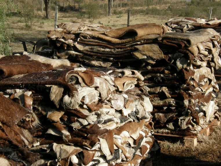 Dry and Wet Salted Donkey/Horse hide /Wet Cow Hides BEST PRICE