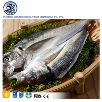 Fresh Frozen Bonito Tuna Fish Seafood