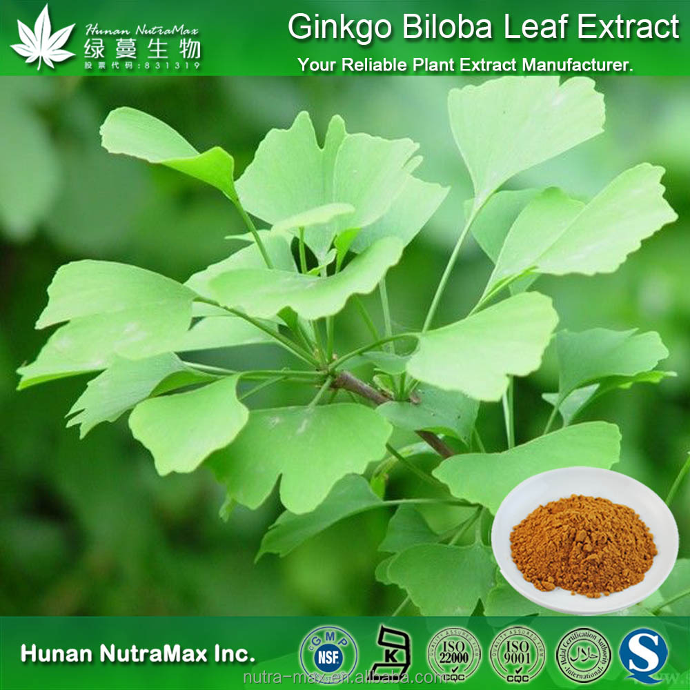 Factory Price Ginkgo Biloba Leaf Extract with 24% flavoglycosides and 6% Terpene Lactones