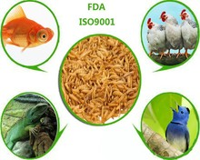 bird feed and chicken feed dried mealworm