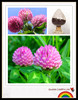 red clover extract isoflavone hplc,high quality red clover extract,red clover extract / p.e.