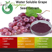 Grape Seed Extract/OPC 95%/Water Soluble Grape Seed Extract
