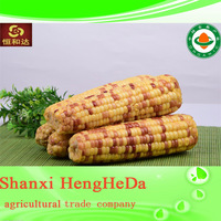 new product credible yellow maize
