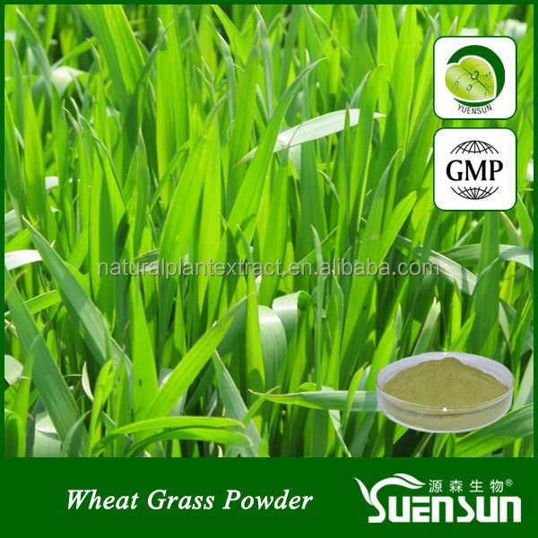 wheatgrass powder natural wheat grass powder organic wheatgrass powder