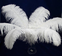 Snow White Ostrich Feather for Wedding Centerpiece Decoration