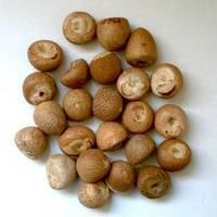 Whole and Split Betel Nuts