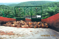 Healthy oil palms behind the ramp of F