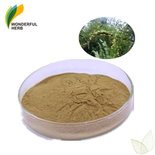 Freeze dried phyllanthus emblica extract indian gooseberry berry powder bulk organic amla