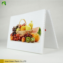 Green Plastic PP Hollow Polycarbonate Sheet/pp hollow board For Advertising decoration