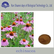 2015 China New Product Herb Medicine 100% Natural Echinacea Purpurea Extract In Bulk