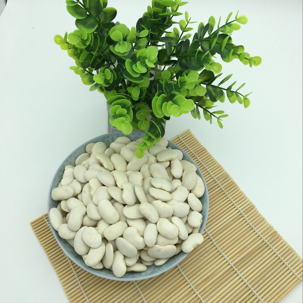 Hot sale! Large white kidney beans