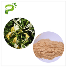 Cheapest Soothing skin Chlorogenic Acid Honeysuckle Flower Extract Powder