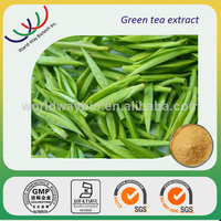 China factory making natural antioxidant 98% polyphenols extract green tea
