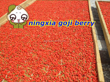 2015 Dried Goji Berries in china,goji berry seed seller,high quality goji berry buyer