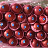Pome fruit products type red delicious apple available in bulk fresh huanniu apple with best price