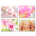Pink Orchid Flowers Giclee Print Butterfly Orchid Canvas Artwork for Living Room Office Decoration Wholesale 4 Pieces