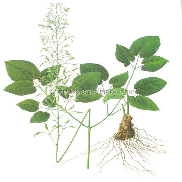Yin Yang Huo Best Selling Sex Medicine Epimedium Extract Icariin 98% HPLC