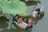 Home Decorative Outdoor Polyresin Animal Resin Mandarin Duck Figure