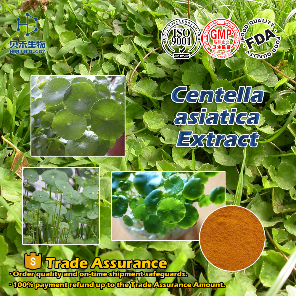 16830-15-2 cosmetic skin care gotu kola extract Health products as capsules or softgel centella asiatica extract