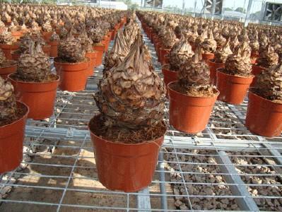 Vasi di plastica per vivaio piante taglio 2015 semina vaso for Vasi per semina