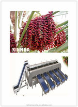 Date Sorting machine/date processing machine