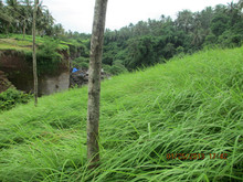 Land 41 Acres for Villa and Hotel in Ubud Bali