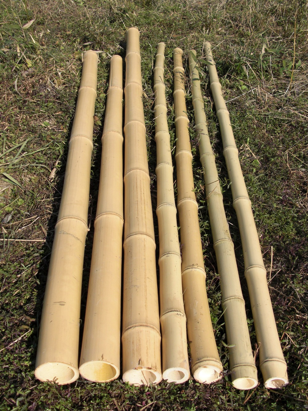 moso bamboo, tonkin bamboo, coloured bamboo pole for sale !