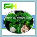 Best Quality Natural Yohimbe Bark Extract Powder