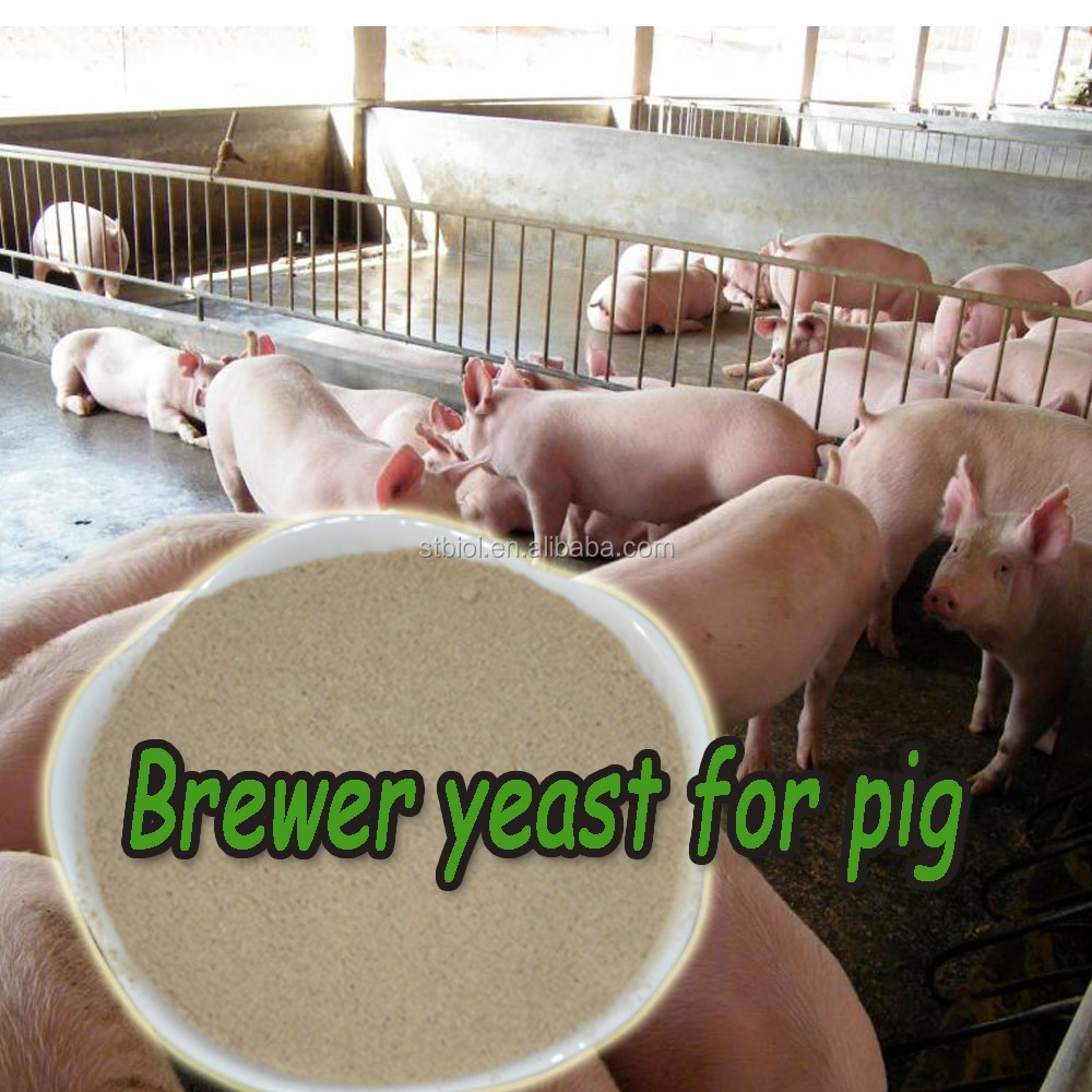 natural pig feed, poultry feed, feed additive brewers yeast