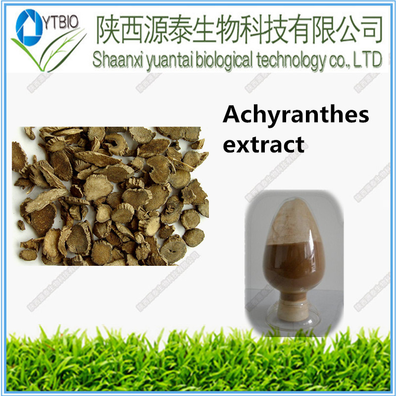 100% Natural Achyranthes bidentata extract powder with low price