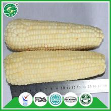 professional carton packing best tasting selling frozen sweet corn