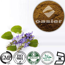 High Quality Coleus Forskolin Extract 10% 20% Forskolin Extract powder Tested by HPLC