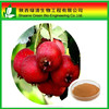 Hot sale Hawthorn fruit Extract Hawthorn P.E.